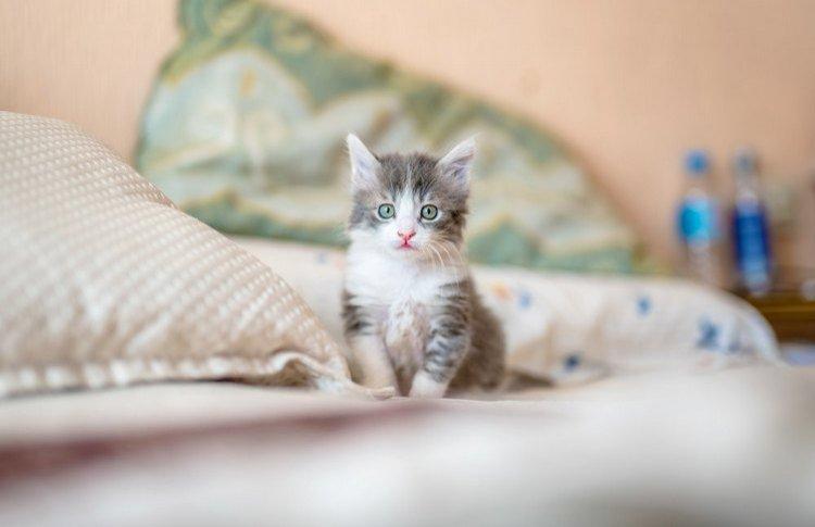 Адаптация животного из приюта  в новом доме: помощь для тех, кто помог