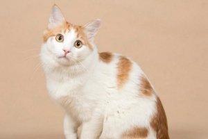 День апельсиновых котов! Кого можно забрать из приютов 4-11 марта