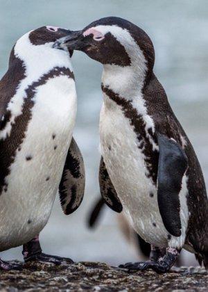 Зоопарки в прямом эфире транслируют кормление животных: где и когда на это смотреть