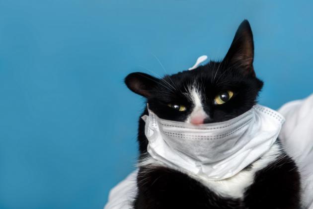 Наши единственные друзья в самоизоляции: опасен ли коронавирус для животных?