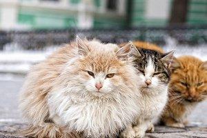 Самоизоляция может убить около 10 тысяч уличных животных