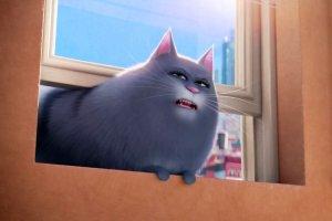 11 свидетельств того, что массовая культура несправедлива к кошкам