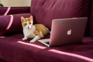 «Я устал, у меня лапки»: коты ушли в коворкинг