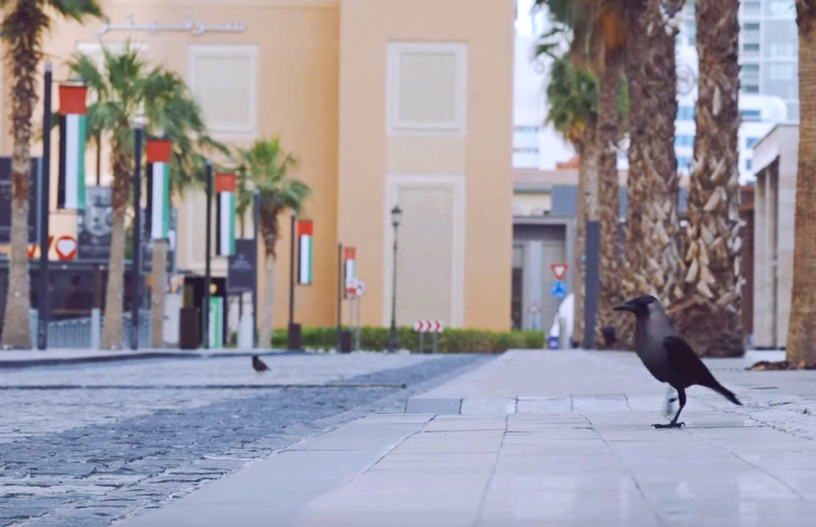 10 клипов в пустых городах
