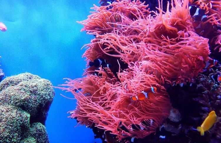 [ comfort zone ] представил новое поколение солнцезащитных средств с фильтрами, безопасными для экосистемы коралловых рифов