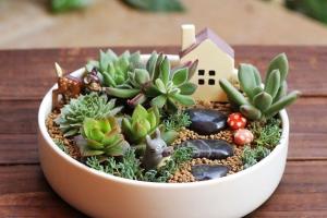 Мастер-класс «Мини-сад в домашних условиях»
