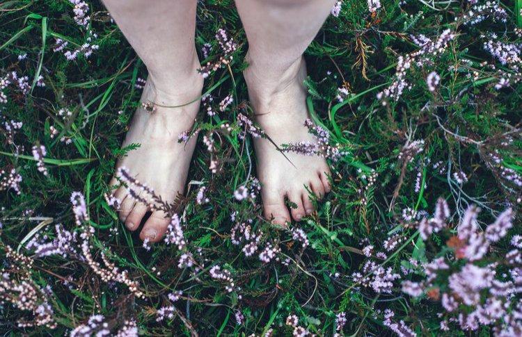 Трогательные новости: Тактильный сад открылся в «Аптекарском огороде»